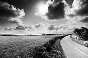 Sunlit Anglesey lane winding its way down to Beaumaris and the Menai Strait