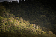 Trees in forest caught in shaft of sunlight, Sukamade beach, Forest in the background, Meru Betiri National Park, East Java, Indonesia, Southeast Asia