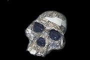 Part of the skull of an Australopithecinus africanus - originally called Plesianthropus transvaalensis.  Original in Transvaal Museum, Pretoria, South Africa.