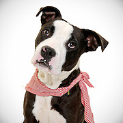 Beautiful dog photos helping shelter dogs find forever homes.