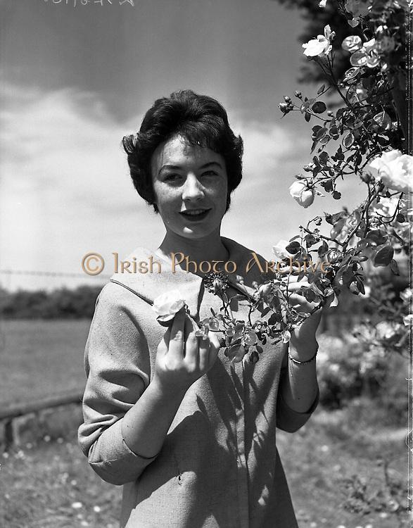Alice O'Sullivan, Dublin Rose, Winner of Rose of Tralee at Trimlestown Gardens, Booterstown.20/06/1959