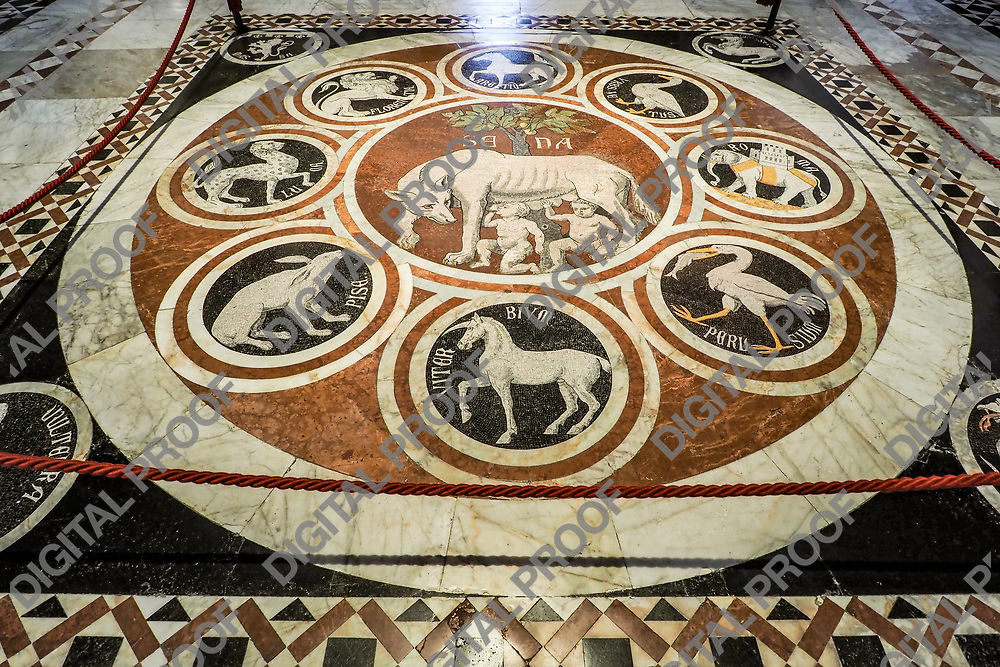 Marble Panel with the history of the She-wolf Sienese on the interior floor of the Siena Dome (Duomo)
