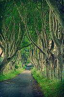 Tree Covered Collin Road in Ballymena, Northern Ireland. Semester at Sea, Spring 2014 Enrichment Voyage. Composite of 3 images taken with a Fuji X-T1 camera and 56 mm f/1.2 lens (ISO 200, 56 mm, f/5.6). Raw image processed with Capture One Pro, NIK HDR Efex Pro (end of the road), and Photoshop CC 2014.