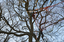 Great Missenden, UK. 28th February, 2021. Activists climb in one of a row of oak trees along Leather Lane. Environmental activists from HS2 Rebellion have recently occupied the trees and set up a camp nearby following local reports that around twelve of the oak trees are threatened with felling for temporary works associated with the HS2 high-speed rail link.