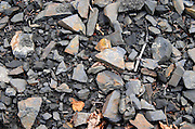 Soil detail. Slate. The black soil. Called Terres Brulees, burnt soil. Domaine Piquemal, Espira de l'Agly, Roussillon, France
