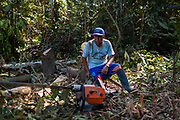 A single man is in charge of felling trees to extend the area of search and extraction of gold in the Peruvian Amazon.