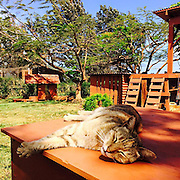 """People Come From All Over The World To Cuddle 500 Kitties At This Cat Sanctuary In Hawaii<br /> <br /> If you like cats and you're going to Hawaii then you might want to add the Lanai Cat Sanctuary to your itinerary. People travel from all over the world to visit it, and it's easy to see why when you look at the pictures.<br /> The sanctuary is home to almost 500 cats (495 to be precise) and visitors are free to pet them all, providing they have a long enough vacation of course! Located on the small Hawaiian island of Lanai, the sanctuary covers 25,000 square foot, and because the cats aren't confined to cages, the free-range felines can roam and explore at their leisure. No wonder the sanctuary's executive director refers to it as the """"Furr"""" Seasons! The cats are available for either foster or adoption, and any cat that doesn't find a home is free to spend the rest of its life at the sanctuary. It's open to the public between 10 a.m. to 3.p.m every day, and our bags are already packed.<br /> ©Lanai Cat Sanctuary/Exclusivepix Media"""