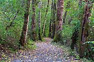 The Tavistock Loop Trail in Brae Island Regional Park in Langley, British Columbia, Canada