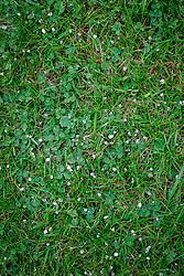 Evergreen lawn feeder