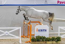 206, Nyrocco-W<br /> KWPN Hengstenkeuring 2021<br /> © Hippo Foto - Dirk Caremans<br />  03/02/2021