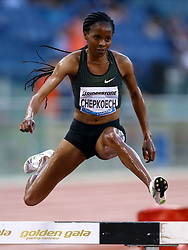 May 31, 2018 - Rome, Italy - Beatrice Chepkoech (KEN) competes in 3000m Steeplechase women during Golden Gala Iaaf Diamond League Rome 2018 at Olimpico Stadium in Rome, Italy on May 31, 2018. (Credit Image: © Matteo Ciambelli/NurPhoto via ZUMA Press)