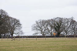 Great Missenden, UK. 18th March, 2021. A view of works to fell a row of hundred-year-old oak trees in Leather Lane in connection with the HS2 high-speed rail link. Almost 40,000 people have recently signed a petition calling for the trees lining the ancient country lane not to be felled to make way for a temporary haul road and construction compound and local residents and conservationists have accused HS2 contractors of destroying active bird boxes on the site.
