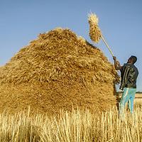Grain by Deretu Lama
