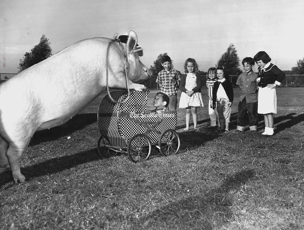 Oink, 350-pound singing pig, playfully pushed a baby carriage  at the opening of the four-day I2th annual West Seattle Hi-Yu in West Seattle Stadium in 1962.<br /> <br /> Richard S. Heyza / The Seattle Times