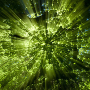 These are some of my favorite pictures with rays of lights shining through the trees.  The pictures provide a sense of warmth and beauty while also being abstract.  The images were created by zooming the lens.  Different effects are achieved by changing the range zoomed and how fast the zoom is done.