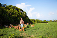 Richard Hoad, a goat herder and social commentator, with his herd in the Scotland District of Barbados
