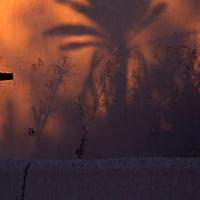 Africa, Morocco, Skoura. Shadows of palms on kasbah wall.