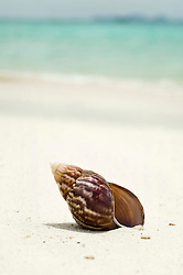 shell at beach, close-up, Koh Lipe, Thailand
