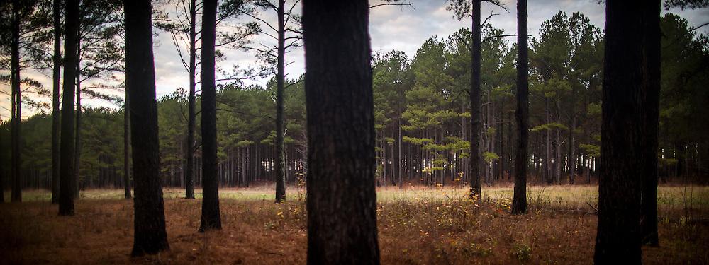 MADISON, GA - DEC., 13, 2016: Brooks III and Brooks IV Pennington on their property, Wednesday, December 14, 2016, in Madison, Ga. (Photo by Stephen B. Morton for Georgia Forestry Magazine)