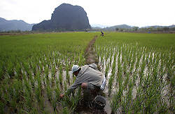THPC built an irrigation system to provide water to the dry season rice fields for Ban Phoumakneng, Lao PDR.