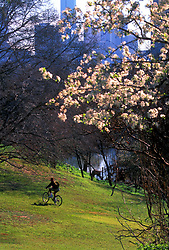 Stock photo of a cyclist at the Buffalo Bayou Hike and Bike Trail
