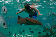 snorkeler with nurse shark, Ginglymostomoa cirratum, crevalle jacks, Caranx hippos, and gray snappers, Lutjanus griseues, Shark Ray Alley, near Ambergris Caye, Belize, Central America ( Caribbean Sea )