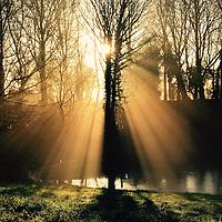 Nederland, Amsterdam, 19 februari 2016.<br /> Ochtenzon schijnt door de bomen grenzend aan de Kometensingel in Amsterdam Noord.<br /> <br /> Scenic view of early morning sun shining through the bare trees at the Kometensingel in Amsterdam-Noord. <br /> <br /> Foto: Jean-Pierre Jans