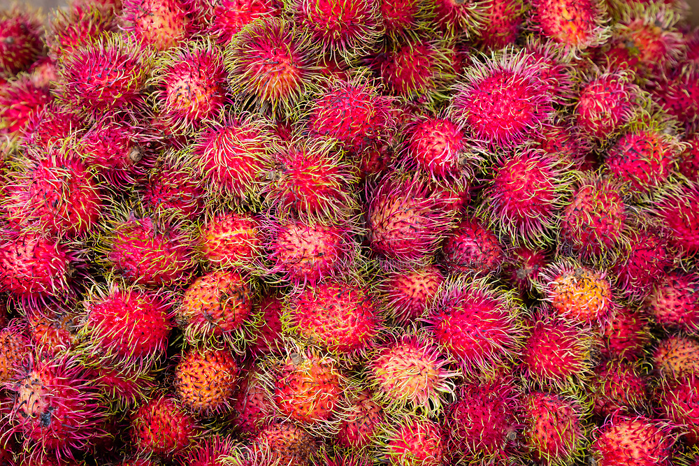 Rambutan fruits at street market in New York's Chinatown. The rambutan is a medium-sized tropical tree in the family Sapindaceae. The name also refers to the fruit produced by this tree. The rambutan is native to Malay-Indonesian region, and other regions of tropical Southeast Asia. It is closely related to several other edible tropical fruits including the lychee, longan, and mamoncillo.