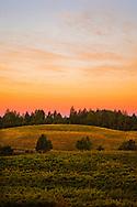 Autumn sunrise over a Howell Mountain vineyard. Napa Valley