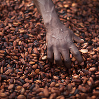 Drying cocoa beans at CAYAWE cocoa coop at Aniassue, Ivory Coast.
