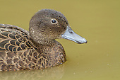 Brown Teal Pictures - Photos