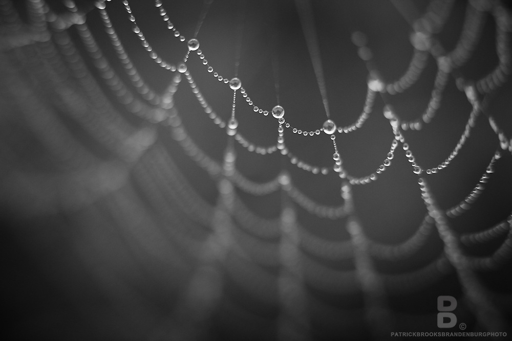 Macro photography of water droplets on a spider web.
