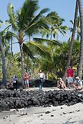 Hawaiian monk seal, Monachus schauinslandi( Critically Endangered ), 2.5 year old male relaxes on the beach while visitors snap photos, Pu'uhonua o Honaunau ( City of Refuge ) National Historical Park, Kona, Hawaii ( the Big Island )