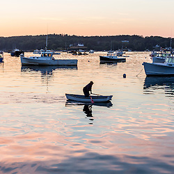 A lobsterman rows to his boat at dawn in Friendship harbor, Maine.