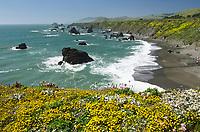 Wildflowers on bluff edge, Sonoma Coast State Park, California