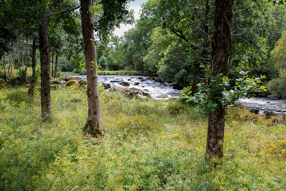 Trees lining River Caragh, County Kerry, Ireland