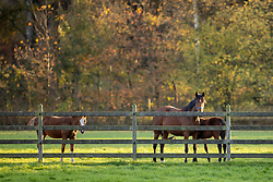 Eurohorse stables<br /> Eurohorse Stables - Grobbendonk 2020<br /> © Hippo Foto - Dirk Caremans<br /> 04/11/2020