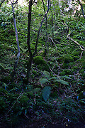 Forest floor of mosses and fallen tree in English woodland.