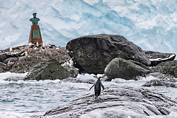 Chinstrap Penguin, Point Wild, Elephant Island and Buste of 'Piloto Pardo'.