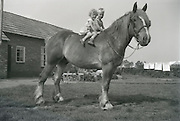 Little boy and girl sitting on the back of a big horse. 1960s Holland
