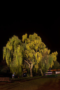 andy spain architectural photography<br /> surburbia at night tree<br /> asvisual