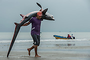 Shark Being Carried (Alopias pelagicus)<br /> Tarqui<br /> Manta<br /> Manabi Province<br /> Ecuador<br /> South America