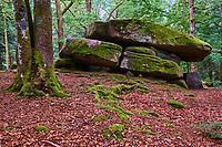 France, Nièvre (58), forêt du parc naturel régional du Morvan, le Dolmen Chevresse // France, Burgundy, Nièvre (58), Morvan park, Chevresse Dolmen