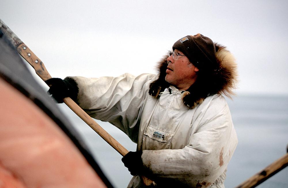 Barrow, Alaska, Native Alaskan whaler ina traditional parka harvesting the carcass of a bowhead whale killed during the annual hunt near Barrow