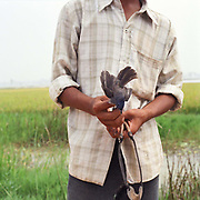 A boy holds a blue bird that he has caught using a catapult in a rice field in Phu Vinh village, Ha Tay province, Vietnam. Songbirds kept in bamboo cages hanging outside houses are popular pets in Vietnam.
