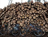 Postolowo, Puszcza Bialowieska, 30.12.2017. Zimowy Spacer Obywatelski w Puszczy . Akcja zostala zorganizowana po tym , jak Nadlesnictwo Hajnowka zamknelo dla turystow kolejne obszary lesne . Protestujacy uwazaja , ze przyczyni sie do zmniejszenia zainteresowania Puszcza turystow a tym samym po raz kolejny oslabi branze turystyczna w regionie Puszczy Bialowieskiej N/z rowery przy scietym drewnie przygotowanym do wywozki fot Michal Kosc / AGENCJA WSCHOD