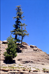 Lonesome pine on Rocky outcrop in Rocky Mountains