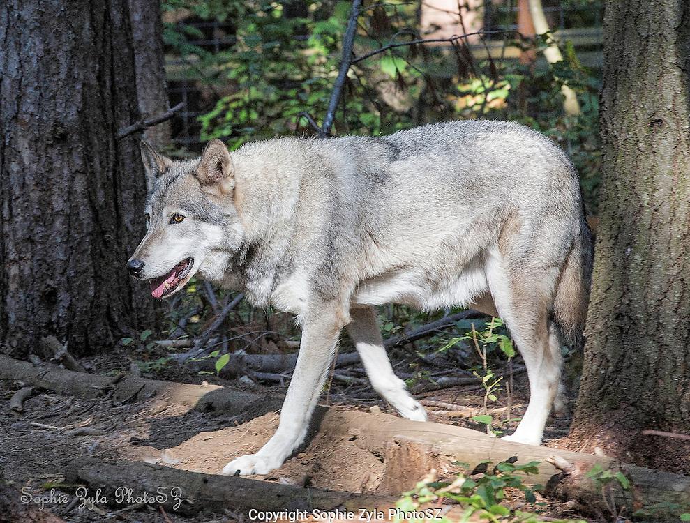 Cree keeping a watchful eye
