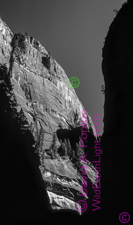 Very high sandstone cliffs form the Narrows section of Zion Canyon, Zion National Park, © David A. Ponton