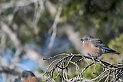 Wildlife photography Gila Valley, NM USA